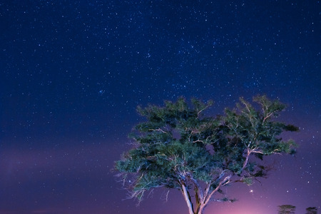 Tree in a night starry sky background