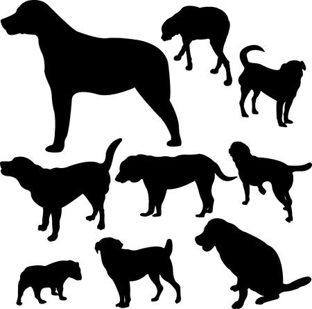 doberman: dogs