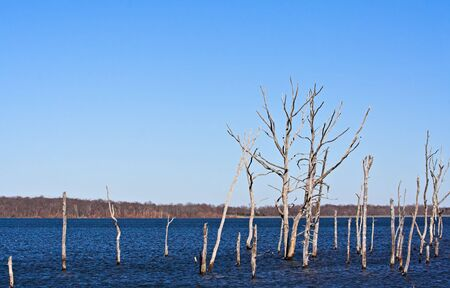 A reservoir filled with dead trees