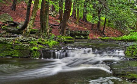 A stream with small waterfalls in a wooded area Imagens