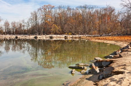 ecological problem: The shoreline around a lake with many fallen dead trees in front of living trees still standing
