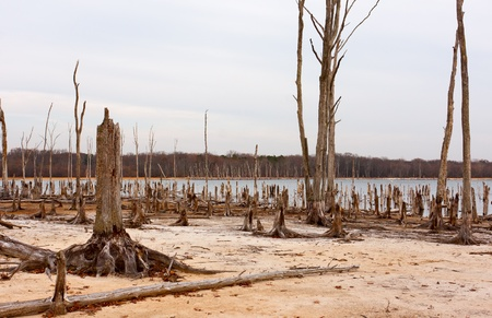 ecological problem: Dead Trees in the forest around a lake with low water levels