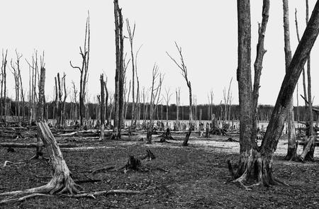 Dode bomen in het bos rond een meer met lage waterstanden