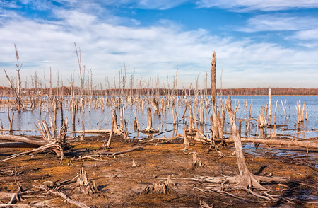 A lake and dead, fallen trees. Land that was once covered by water from the lake is now exposed.