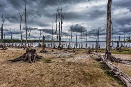 Dead Trees in the forest around a lake with low water levels. This photo depicts drought conditions and Climate Change. Location is Manasquan Reservoir, New Jersey. Stock Photo