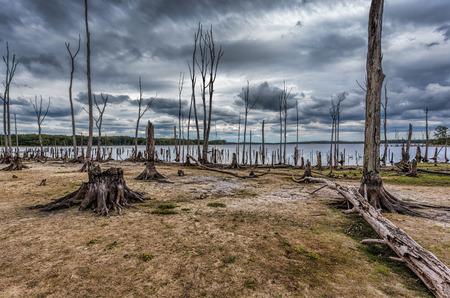 Dode bomen in het bos rond een meer met lage waterstanden. Deze foto toont droogte en klimaatverandering. Locatie is Manasquan Reservoir, New Jersey.