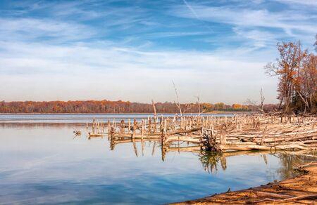 A lake dead, fallen trees