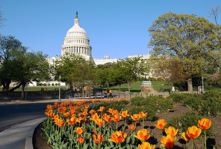 national monuments: US Capitol and tulips Stock Photo