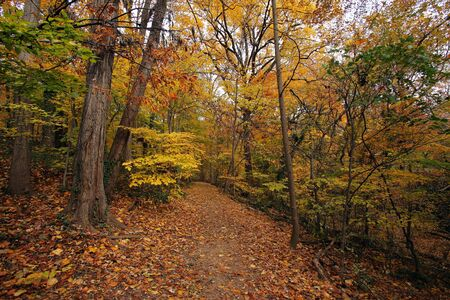 rock creek: Fall in Washington DC, Rock Creek park Stock Photo