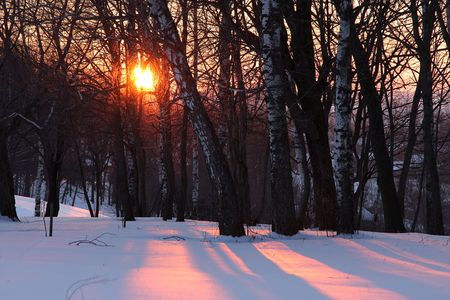 Sunset in winter forwst Stock Photo - 3472111