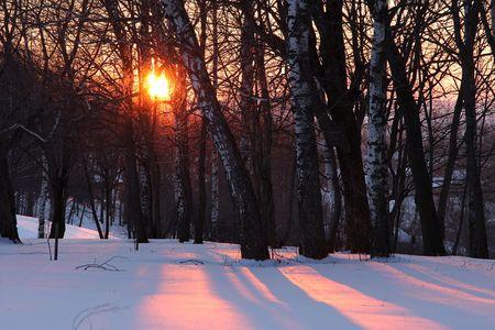 boldino: Sunset in winter forwst