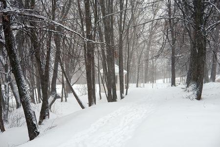 boldino: Snowstorm