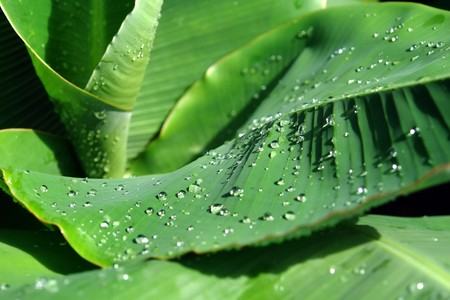 dewdrops: Dewdrops on green leaves Stock Photo