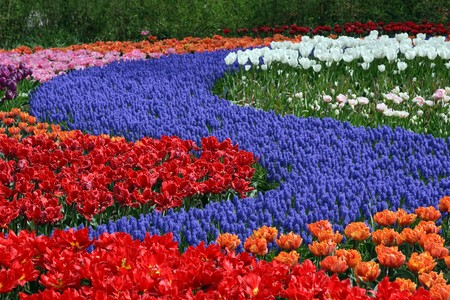 Multicolored flower carpet photo