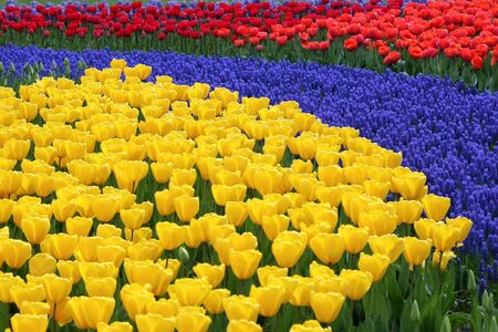 Multicolored flower bed Stock Photo - 4332252