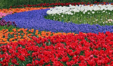 Multicolored flower bed Stock Photo - 4332239