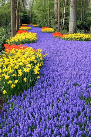 Fower bed, Keukenhof, the Netherlands photo
