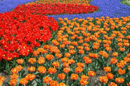 Spring flower bed in Keukenhof gardens, the Netherlands Stock Photo - 4420188