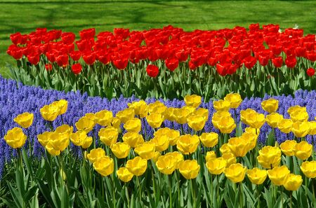 Spring flowers in Keukenhof gardens, the Netherlands photo