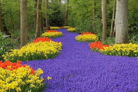 Cama de flores, Keukenhof, Pa�ses Bajos Foto de archivo