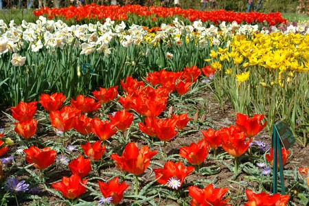 Spring flowers in Keukenhof gardens, the Netherlands Stock Photo - 4460757