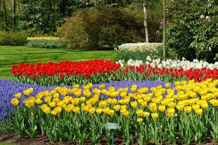hyacints narcissus: Spring flower bed in Keukenhof gardens, the Netherlands Stock Photo