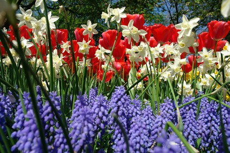 Spring flowers in Keukenhof gardens, the Netherlands Stock Photo - 4460752