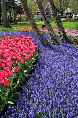 Spring in Keukenhof, the Netherlands Stock Photo - 4495967