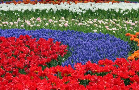Multicolored flower bed Stock Photo - 4495939