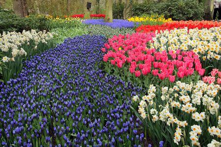 Spring flower bed in Keukenhof gardens, the Netherlands Stock Photo - 4550833