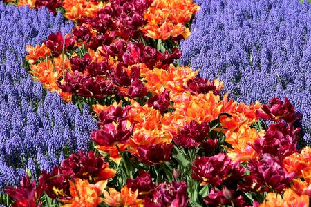 Multicolored flower bed photo