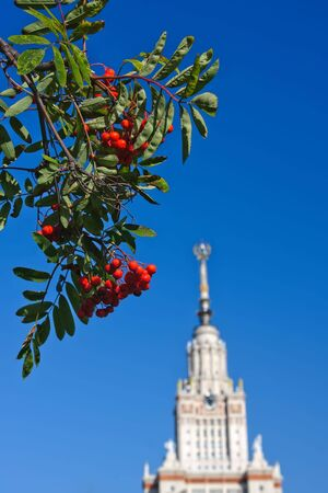 sorbus: Sorbus with Main building of Moscow State University in background