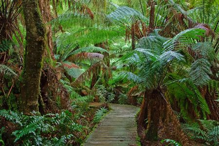 Pathway in rain forest, Australia Stock Photo