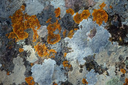 multycolored: Natural backgrounds: stone surface with multycolored lichens
