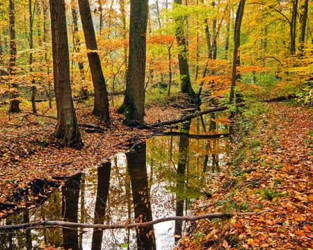 Landscape with wooden river in autumn forest photo