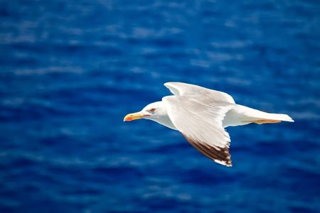 Flying seagull Stock Photo - 5355822