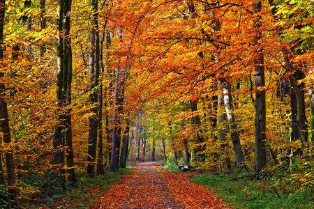Colorful autumn park Stock Photo - 5355869