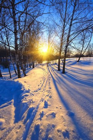Beautiful sunset in a winter park Stock Photo - 5355969