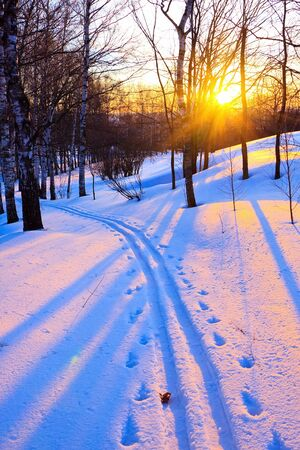 Beautiful sunset in a winter park Stock Photo - 5380806