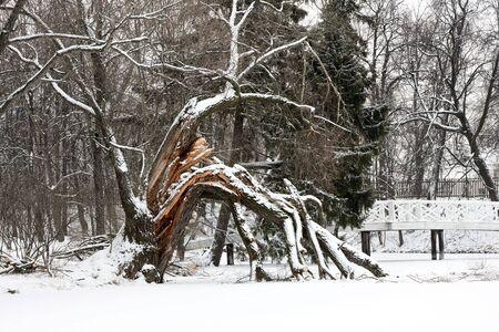 boldino: Winter landscape with bridge and broken tree