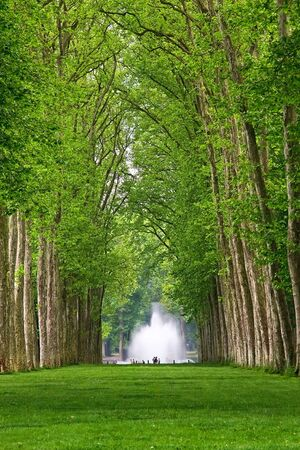 versailles: Alley in the Park of Versailles, France