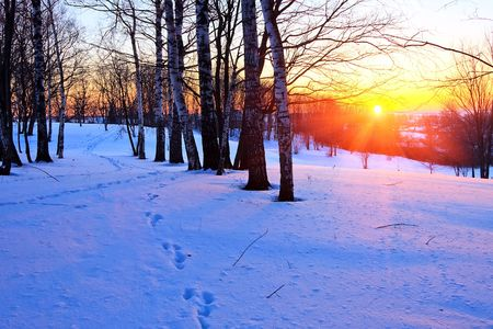 Red sunset in winter park Stock Photo - 5615080