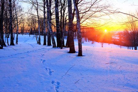 boldino: Red sunset in winter park Stock Photo