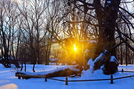 Beautiful sunset in winter park Stock Photo - 5615089