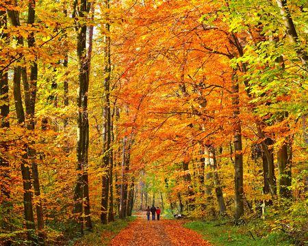 Walking in autumn park, Frankfurt, 2008 Stock Photo - 5615090
