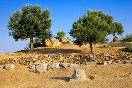 Olive trees growing in ruins of Sanctuary of Poseidon, Poros, Greece photo