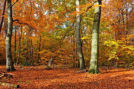 Forêt automne au coucher du soleil Banque d'images - 5615116