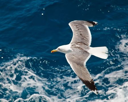 Seagull flying over blue water background Stock Photo - 6005923