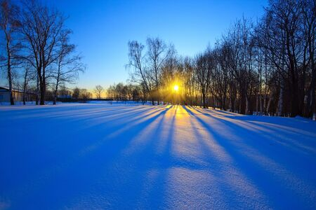 boldino: Beautiful sunset in a winter forest, Russia