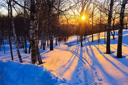 Beautiful sunset in a winter park, Russia Stock Photo - 6005908